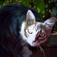 Любопытный кот :: Natalie Т.