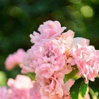 Квіти :: Natalie Т.