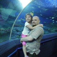 Подводный мир :: Иван Лазарь