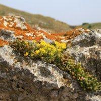 каменный цветок :: васек задунайский
