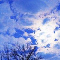 Лунная ночь... :: Алла Шупик