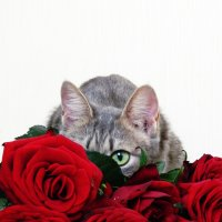 Не знаю, кто уронил вазу ^_^ :: Ирина Миронцева