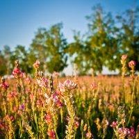 Цветут цветы... :: Виктория Гринченко