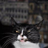 Кошка :: Виктория Макаренко