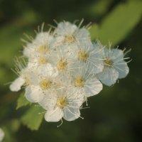 цветок :: Сергей Па