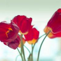 Тюльпаны у окна :: Мария Арбузова