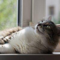 Я на солнышке лежу :: Мария Арбузова