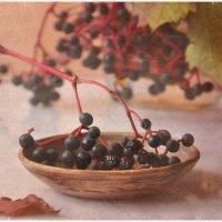 Дикий дикий виноград :: Ольга Мальцева