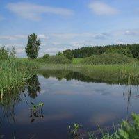 Рыбное место :: Alexey Afonin