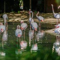 фламинго :: Дмитрий Карышев