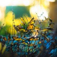 Листья-бабочки :: Алина Круглянская