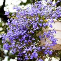Цветы :: Александра