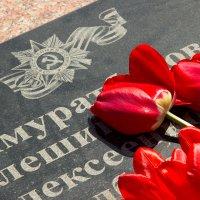память :: Александр Литовченко