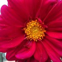 Цветок :: Svetlana ...