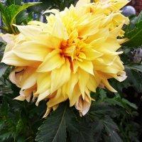 Цветок 2 :: Svetlana ...