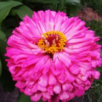 Цветок 3 :: Svetlana ...
