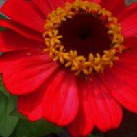 Цветок 4 :: Svetlana ...