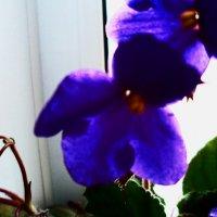 Цветок 5 :: Svetlana ...