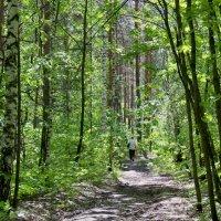 По весеннему лесу :: Александр Садовский