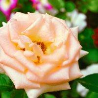 Любовный цветок. :: юрий Амосов