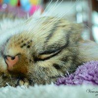 Сладких снов :: Вероника Томилова
