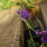 цветочки :: Марина Галанина