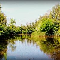 озеро :: Юлия Тарасенко