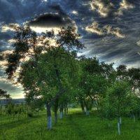природа :: klevyanyk Клевъяник