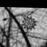 Снежинка :: Снежана Удалова