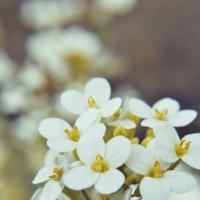 Цветы :: Римма Федорова