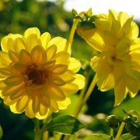 Цветы и солнце :: Натали Деметер