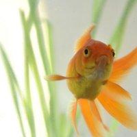 Рыба :: Alyona Shchenina
