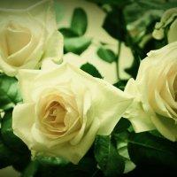 розы :: Виктория Азарова