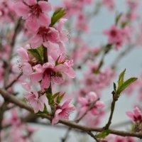 Весна :: Олег Плотников