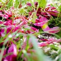 Цветочное лето :: Павел Данилевский