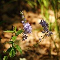 Полевые цветы :: Дмитрий Скубаков