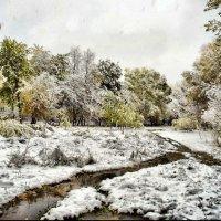 Первый снег :: Алксандр Тельтевской