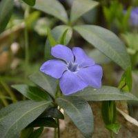 Цветы :: Андрей Думенко