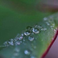 после дождя2 :: Анна Лиссова