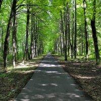 Парк Мира (Вологда) :: Тема Сбоев