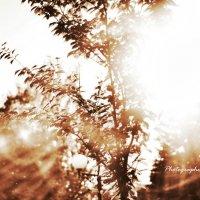 В лучах солнца ... :: Дмитрий Призрак