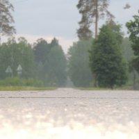 после дождика :: Алексей Гладышев