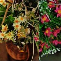 весна) :: Аня Назаренко
