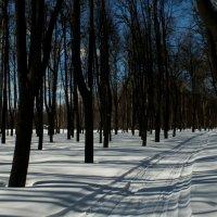 зимний парк :: Егор Жуков