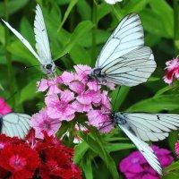 И снова букет из бабочек :: Диана Задворкина