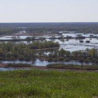 река Десна весной :: Анастасия Едакова