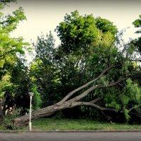 После урагана в Одессе 31.05.2013 :: Алексей Помогаев