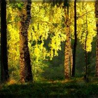 Закатный свет :: Olenka