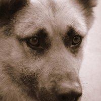 Собачье внимание :: Лариса Корсакова