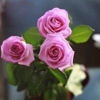 Розы :: Валерия Малик